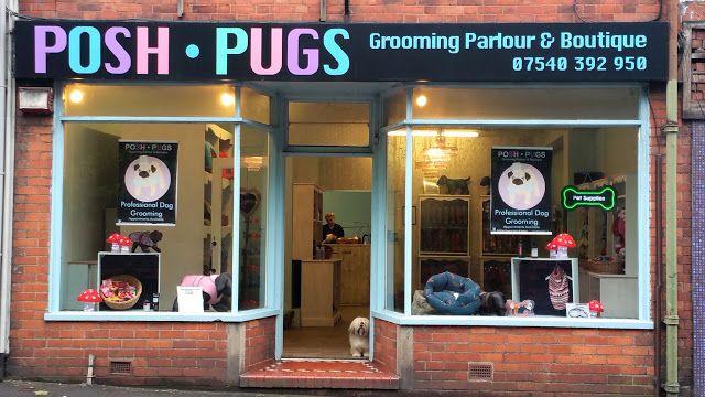 Posh Pugs Pugs Staffordshire Dog Friends
