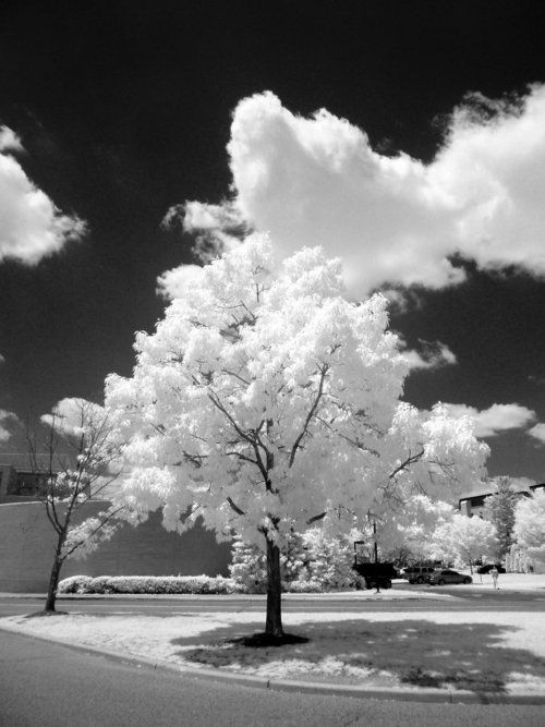Black And White Nature Black And White Pinterest Blanco