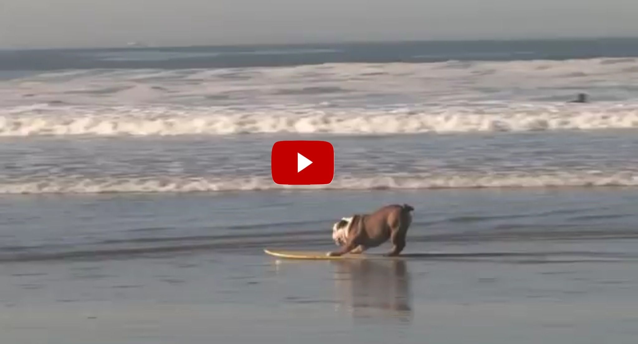 My Dog Wanted Play On The Beach, But Then He Stole My Wakeboard And Did THIS!