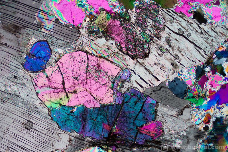 Thin Section Of Lepidolite Mica And Tourmalines The