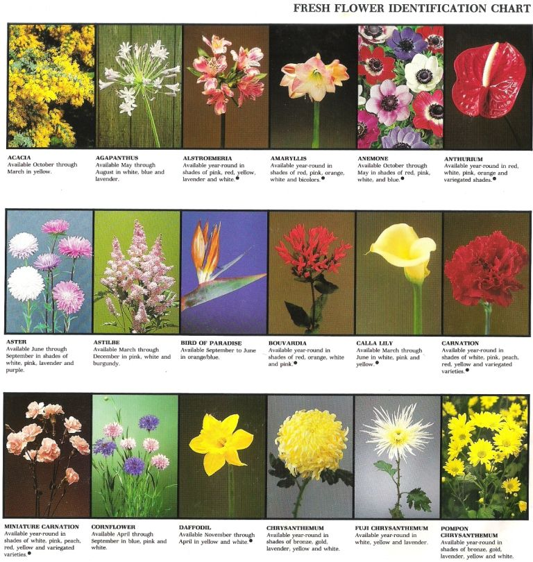 Pages Of Fresh Flower ID. Great For Plant Science, Floral