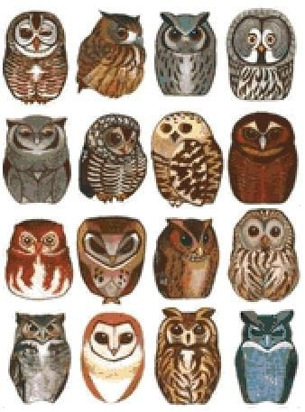 Collection of owls cross stitch pattern paper verion or pdf files if you are looking forward to make an tattoo then obviously choose an experienced artist here are some creative pictures of cute owl tattoo designs to maxwellsz