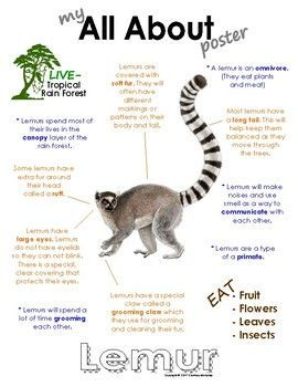 My All About Lemurs Book Workbook Tropical Rain Forest Jungle Animals Rainforest Animals Jungle Animals Lemur