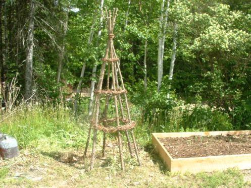 DIY Grape Trellis | DIY Rustic Garden Trellis With Cedar And Grapevine |  Mainely Gardens