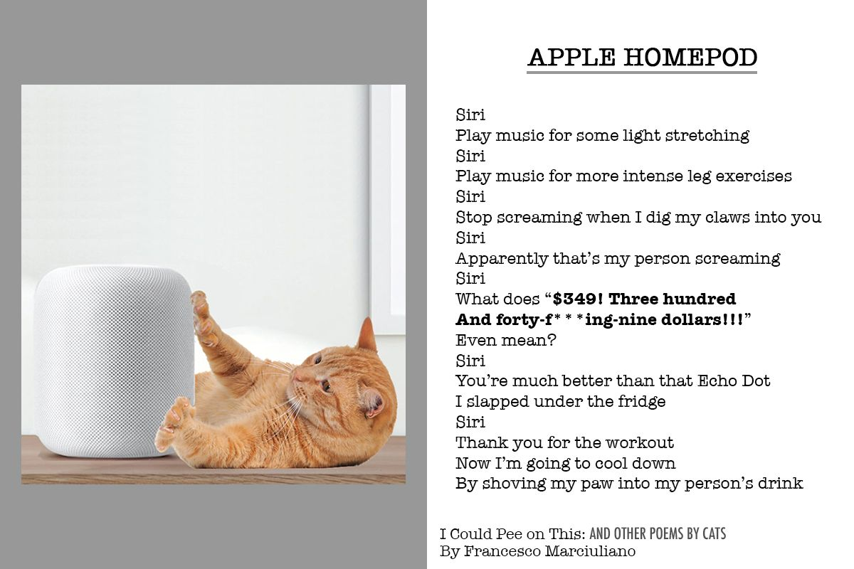 """""""Apple HomePod""""—A Poem by the Cats of """"I Could Pee on This: And Other Poems by Cats"""""""