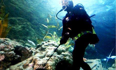 Underwater Minigolf In New Plymouth NZ. only $20