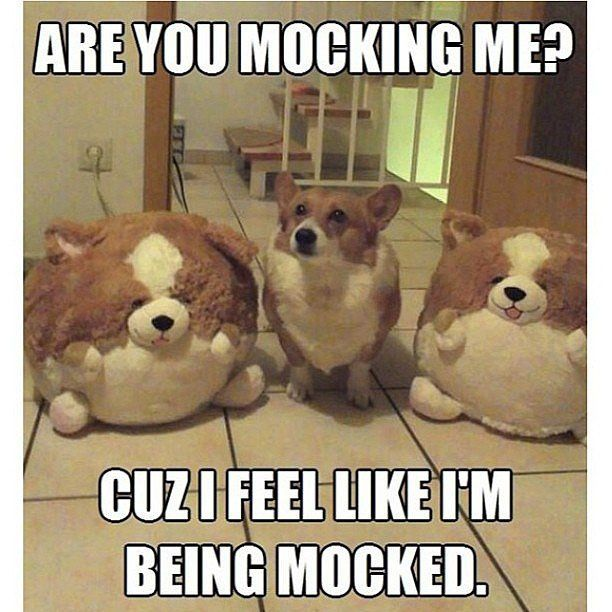c5c4b5a3cdb305a1bdcdd0b732730132 need a laugh? these animal memes should do the trick! grumpy cat