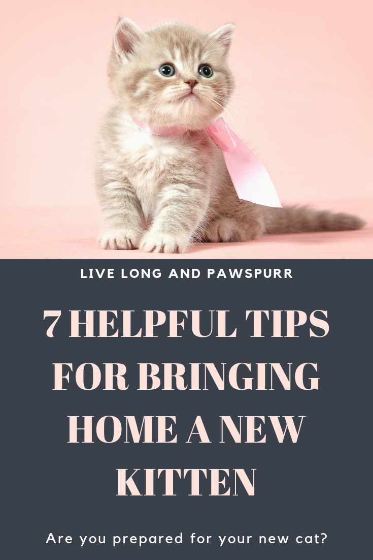 7 Helpful Tips For Introducing A New Kitten To Your Home Kittens Cats Pet Blog