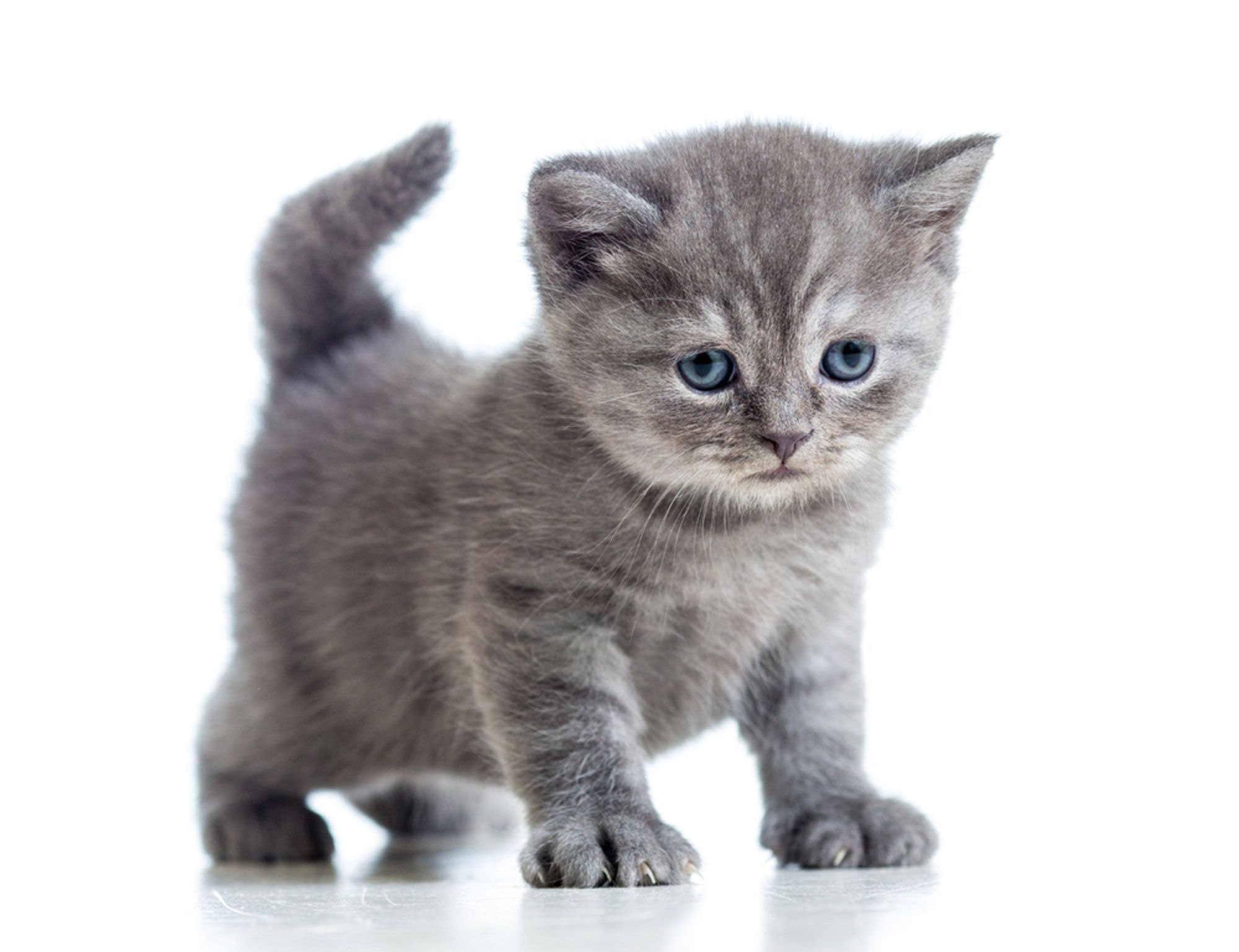 Photos And Videos Cute Cats And Dogs Cute Cats And Dogs Sick Kitten Gorgeous Cats