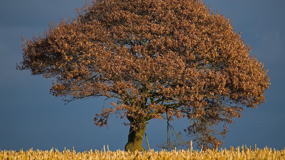 Verbreitet sonnig, trocken und mild: Woche startet mit ruhigem Herbstwetter