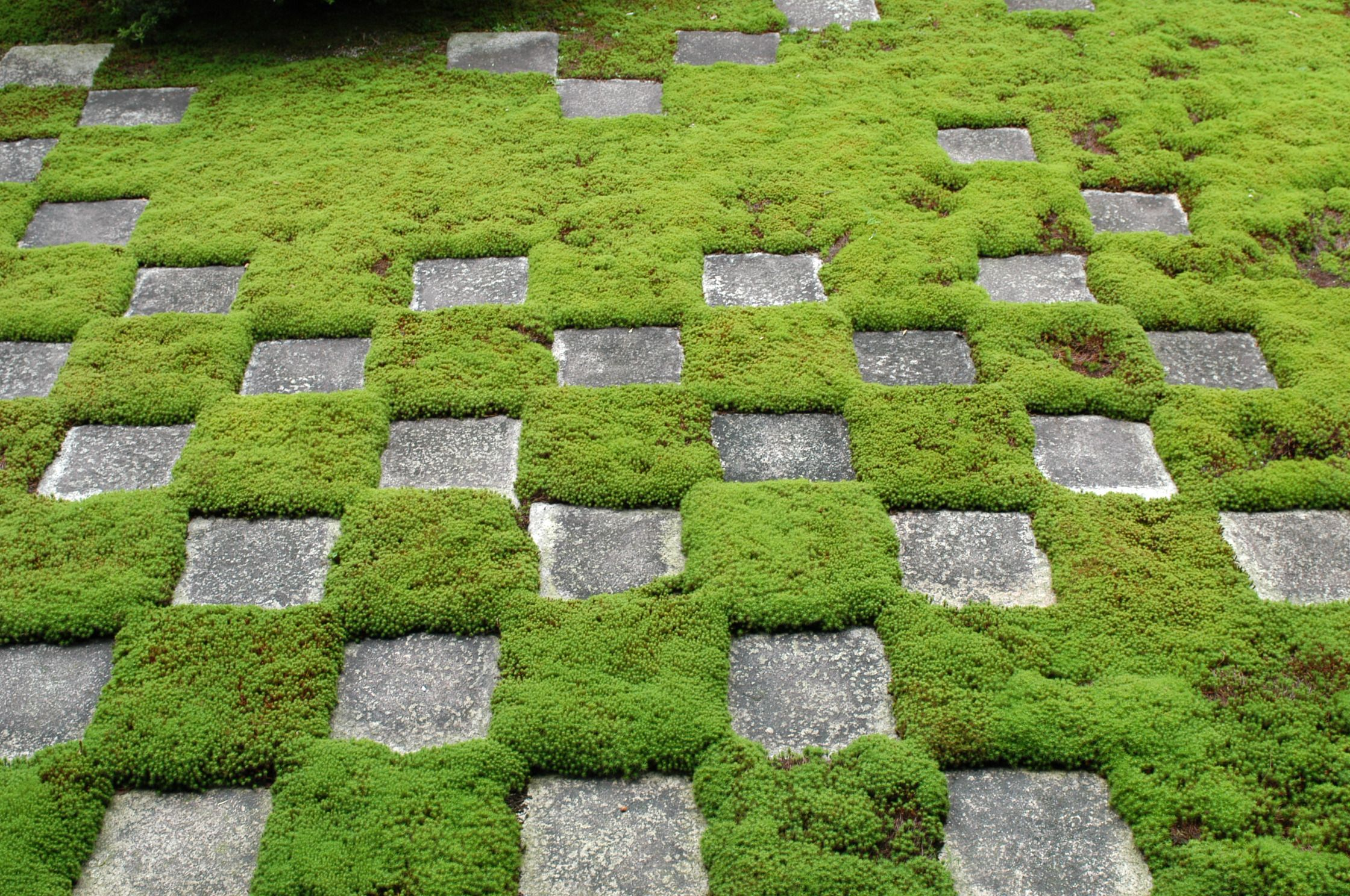 Glorious ground cover ideas for your garden patios and for Landscaping ground cover plants