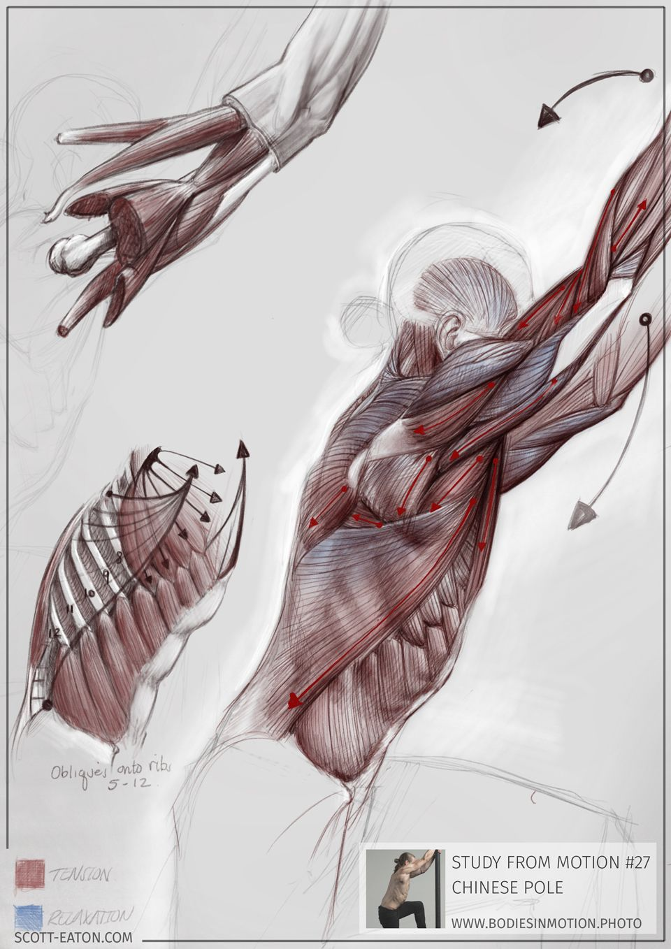 Ecorche drawing from Scott Eaton\'s Bodies in Motion library ...