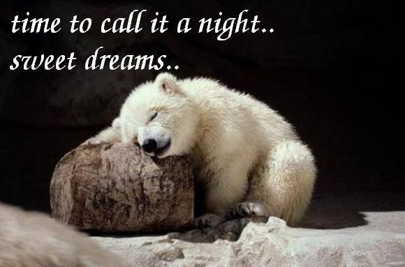 Image result for good night quotes animals