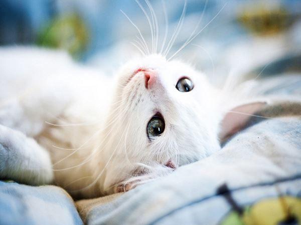 貓咪總是亂尿尿 到底要如何改善? | 寵毛網Petsmao | 寵物資訊平台
