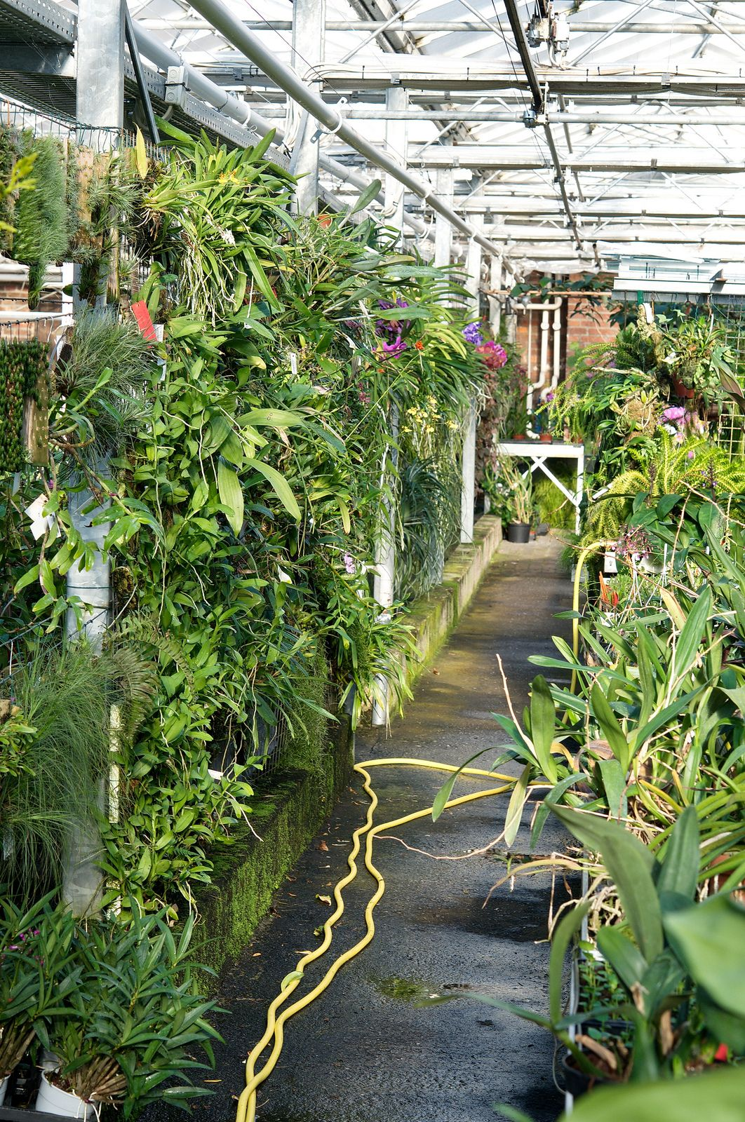 Orchideen Holm Wall With Miniature Orchids Orchid House Best Indoor Plants Jungle Gardens