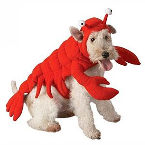 Watch All You Is Now A Part Of Pet Halloween Costumes Dog