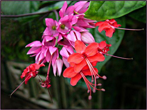 Amazon Rainforest With Images Rainforest Flowers Amazon