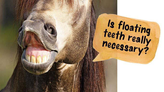 Is Floating My Horse's Teeth Really Necessary?
