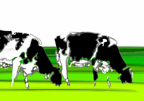 Cows in minimalist scenery, beautiful lines and beautiful composition of black and white and fresh greens. http://www.colorsquare.nl