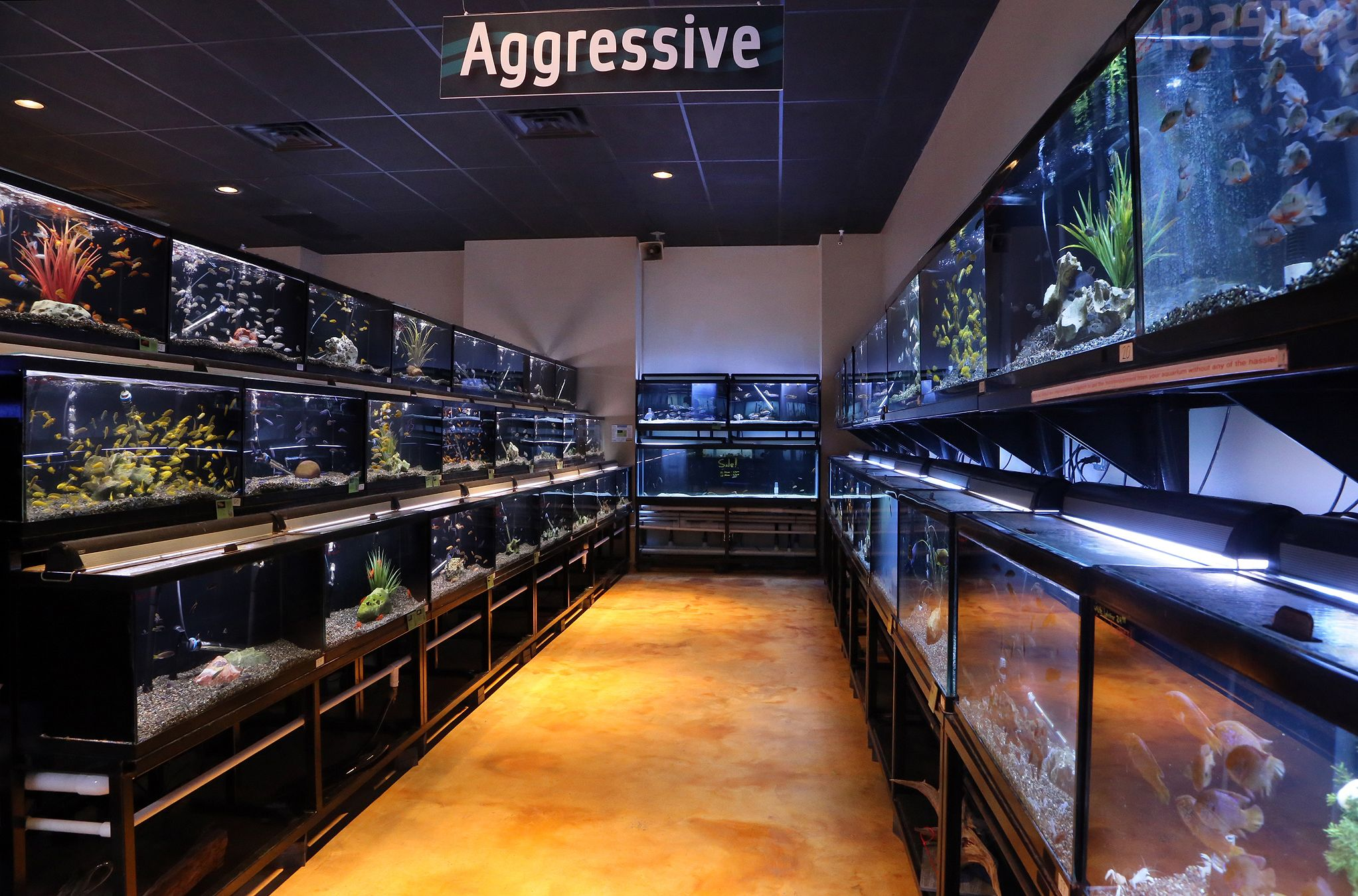 Freshwater aquarium fish houston - Cichlid Row Freshwater Fish Department