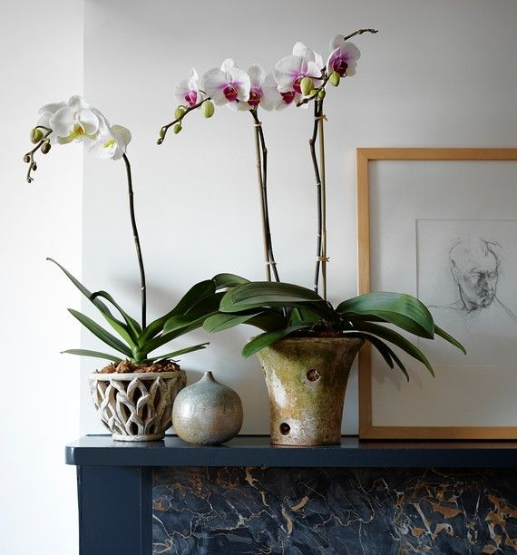The Best Orchid Pots Orchid Planters Orchid Pot Orchids