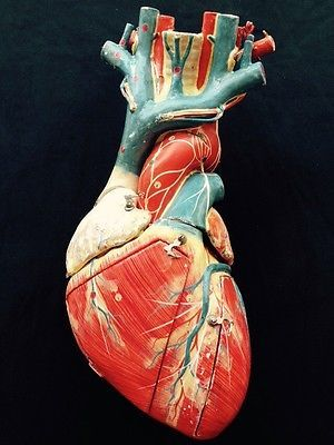 Paper-Mache-Medical-Anatomical-Heart-Model-Vintage-Detailed-Clay ...