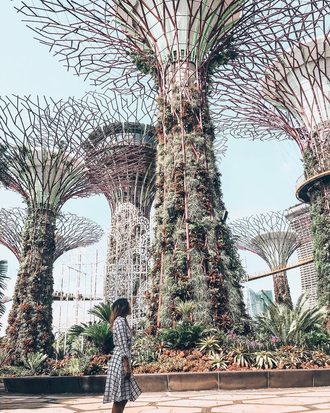 c5c8c5dbc97311b4ba2f7402df65d21f - Supertree Grove Gardens By The Bay Singapore
