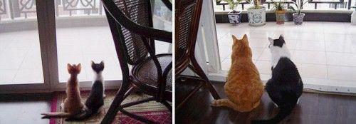 Photo of 【猫 画像】 こ ん な に 変 わ っ た!? 猫 の ビ フ ォ ー ア フ タ ー を 比較 す る と ・ ・ ・!? |猫 知 る