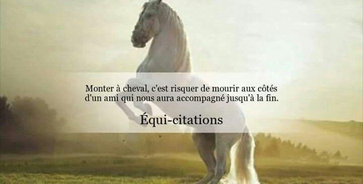 Très Épinglé par Lucie dlv sur [Sport]:Phrases de cavalier(e  KG82