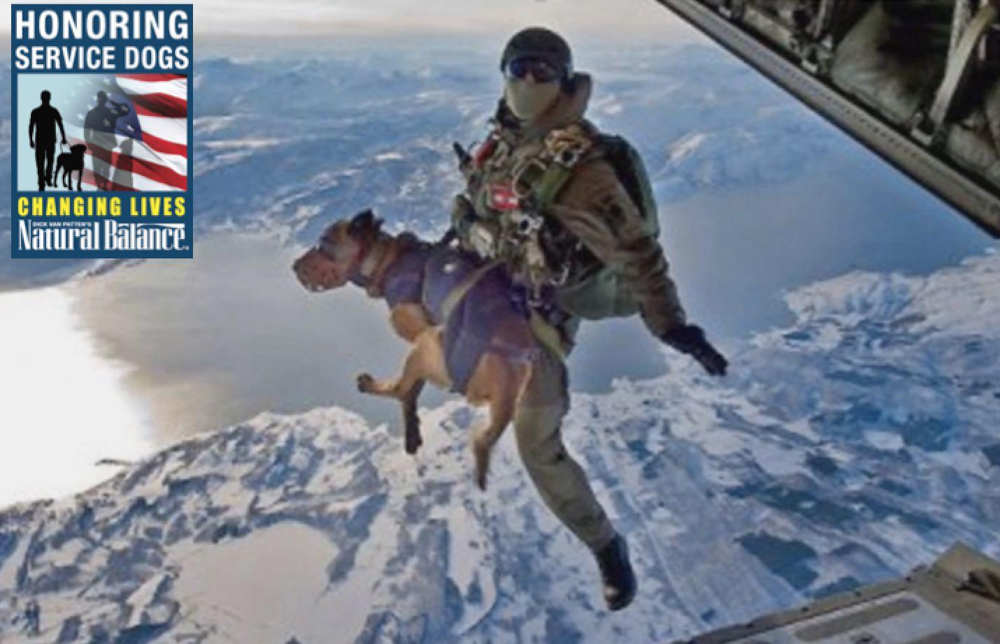military+working+dog+parachute+service+dog+month+petco+natural+balance.jpg (1430×922)