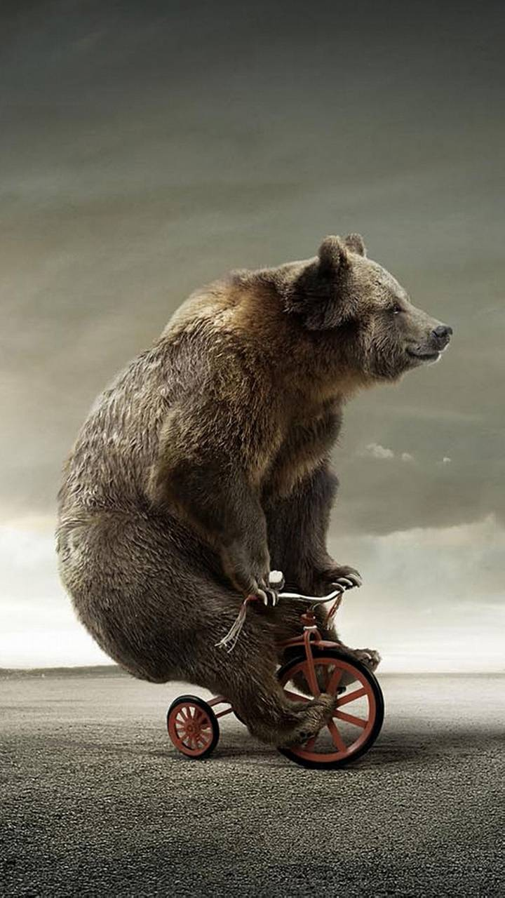 Download Funny Bear Wallpaper By Tony Stark 1e Free On Zedge Now Browse Millions Of Popular Bear Wa Animal Wallpaper Bear Wallpaper Dog Wallpaper Iphone