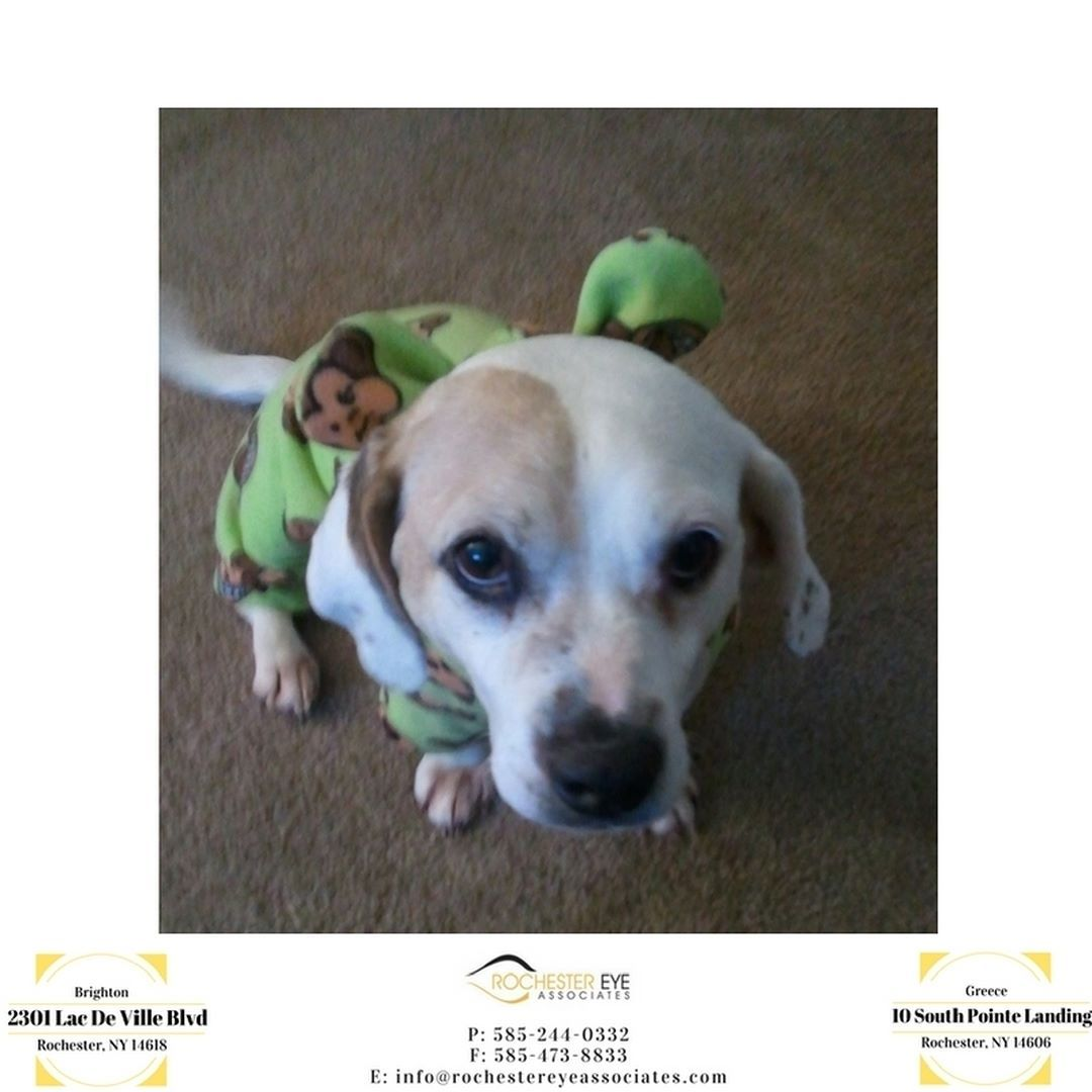 Dress up your pet day - Happy National Dress Up Your Pet Day Astro Is Stayin Comfy
