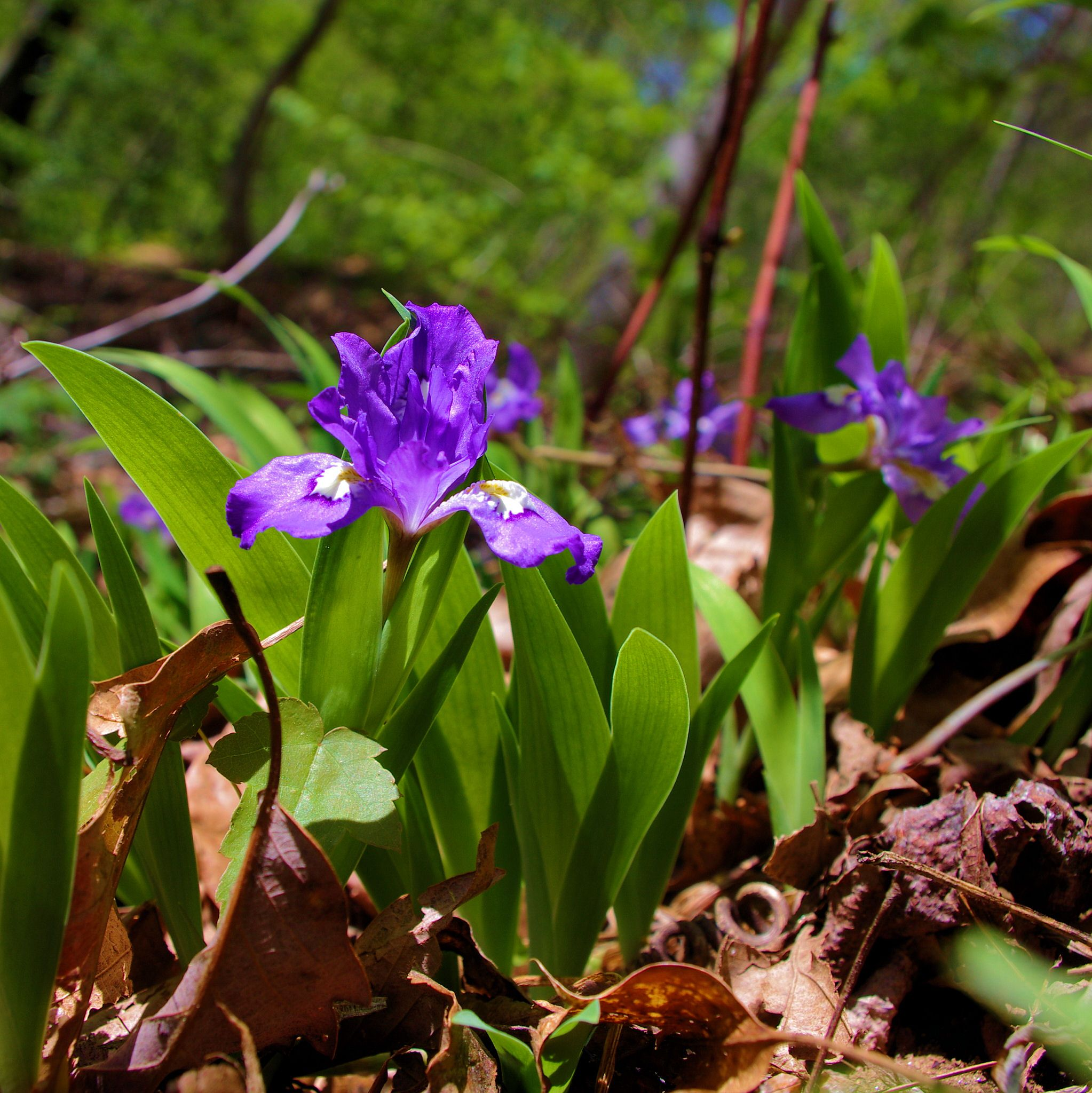 Spring wildflowers along a hiking trail in the nc mountains near spring wildflowers along a hiking trail in the nc mountains near asheville dhlflorist Image collections