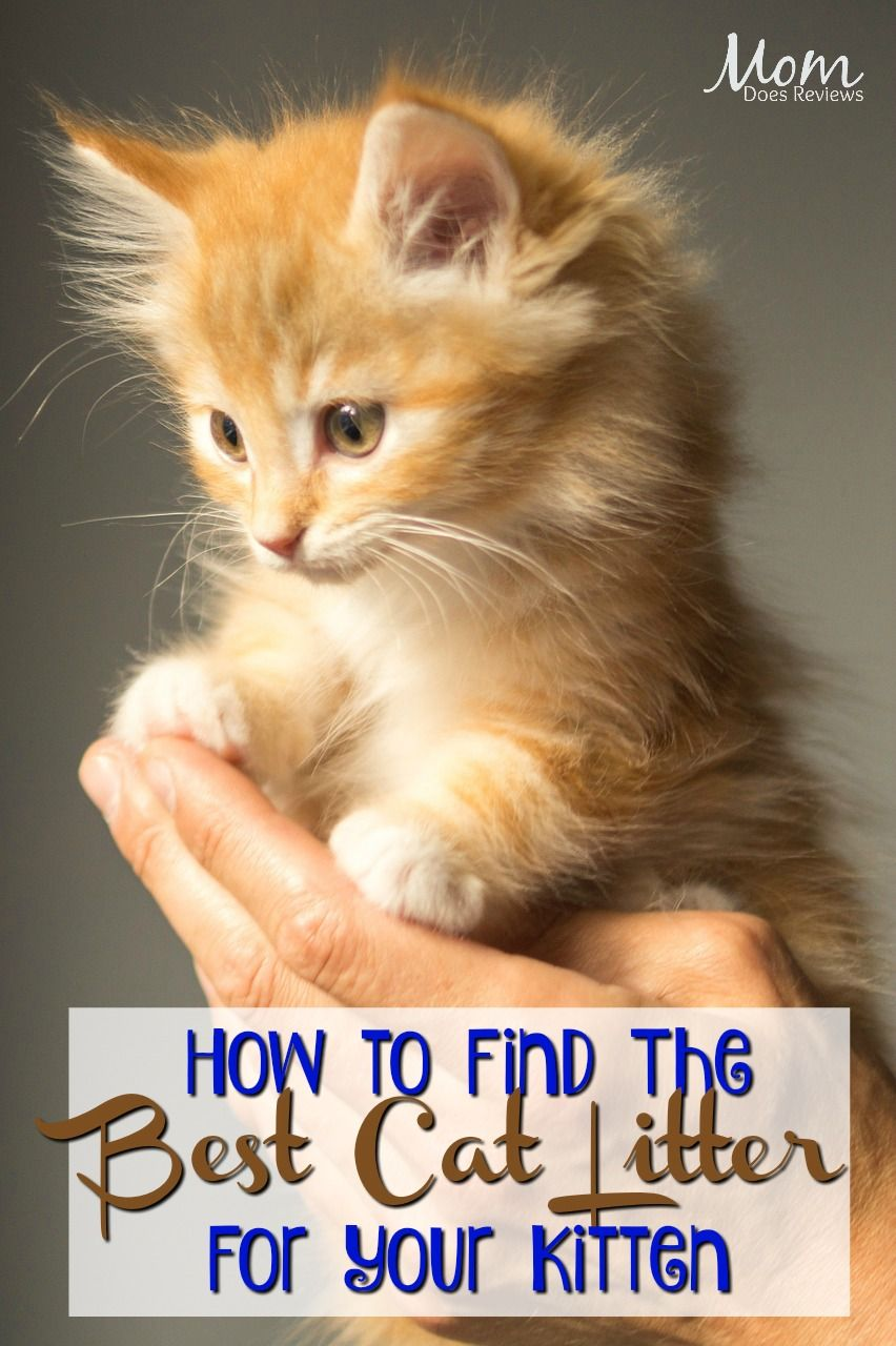 How To Find The Best Litter For Your Cat Indoor Cat Best Cat Food Best Cat Litter