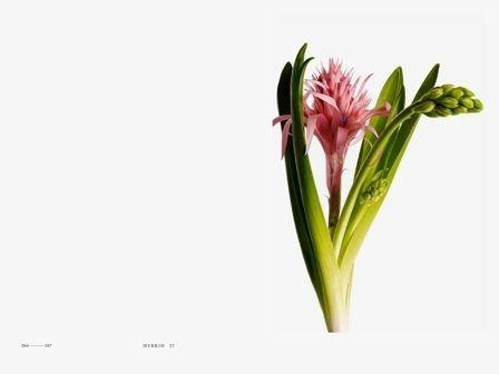 Encyclopedia of Flowers by Kyoko Wada