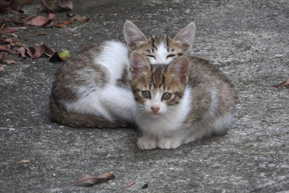 【画像】 子猫と猫画像たまったので適当に貼っていく