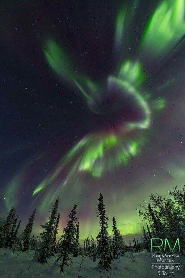 Incredible Northern Lights early Sunday morning as seen in Fairbanks, Alaska. Photocredit: Marketa Murray