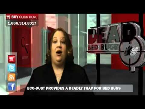 Best Bed Bug Facts Dead Bed Bug Blog Bed Bugs Bugs Facts 400 x 300