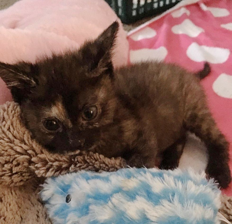 No One Expected This Little Tortie Kitten To Survive But She Surprised Them All With Her Incredible Will To Live Tortie Kitten Cat Mom Kittens And Puppies