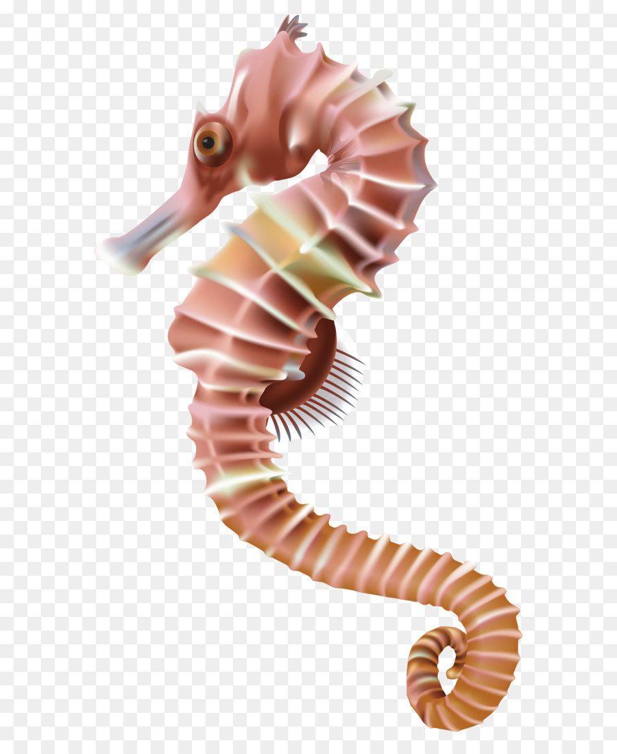 Seahorse Leafy Seadragon Clip Art Seahorse Png Transparent Clip Art Image Art Images Clip Art Art