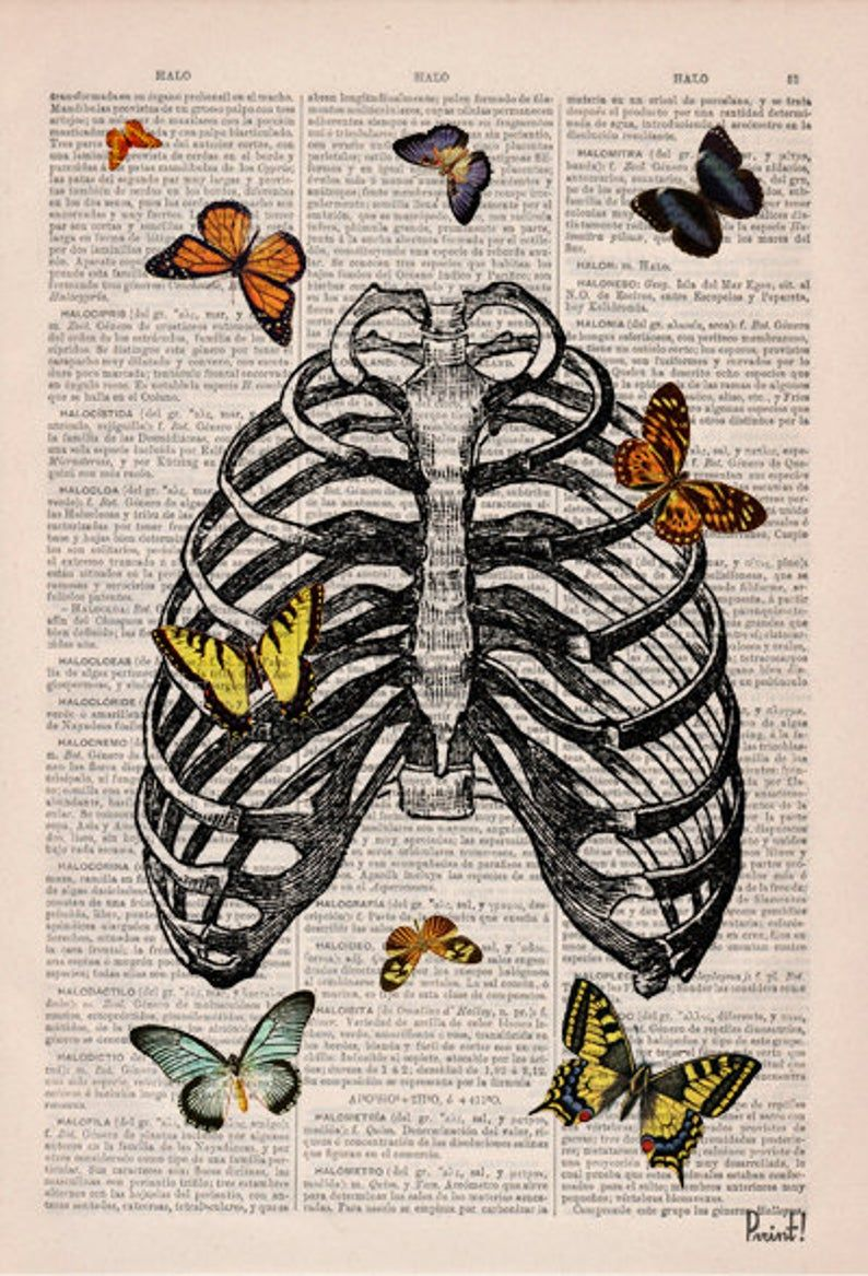 Valentines day gift Butterfly collage Upcycled Dictionary Page, Upcycled Book Art Print,Book Print Butterflies in rib cage- SKA068