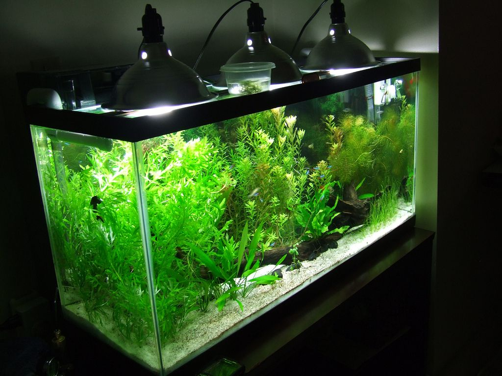 Aquarium fish tank hoods -  My Inexpensive Cfl Light Solution The Planted Tank Forum More