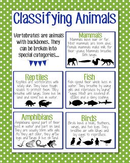 Magic Markers Classifying Animals Classifying Animals Science Anchor Charts First Grade Science