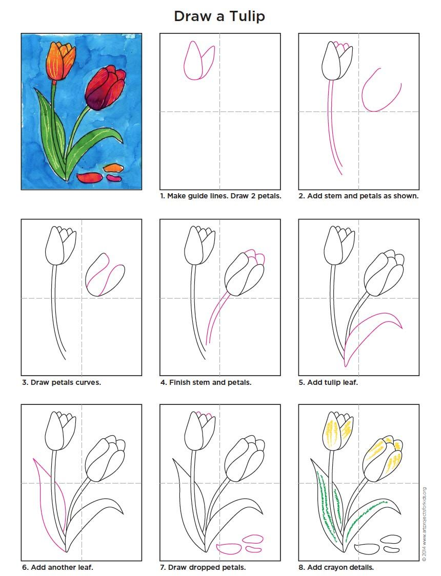 Draw a Tulip Flower art, Easy drawings, Tulip drawing