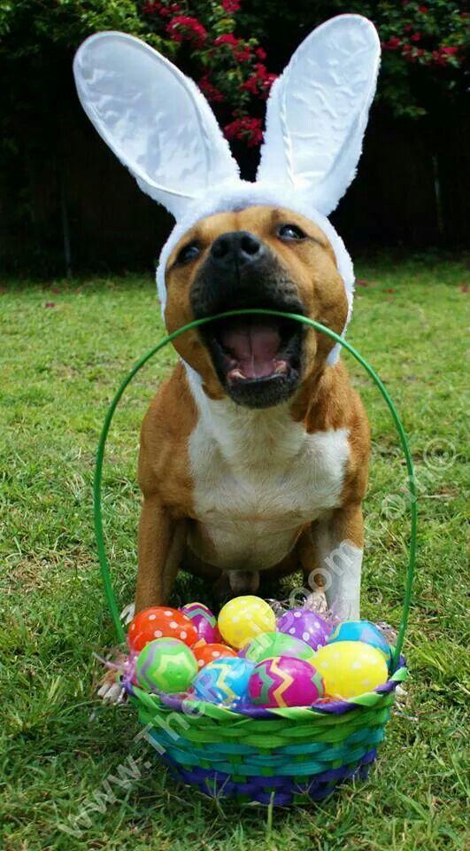 Num num num! Easter dog, Easter pets, Easter dog photos