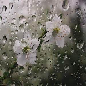 Floral Rain...