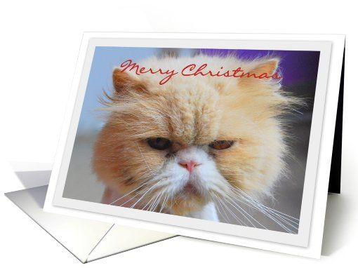 Merry christmas persian cat humor card pinterest persian cats persian cat humor card httpgreetingcarduniverseholiday cards christmas cardsanimals petscatsmerry christmas persian cat humor 723238gcu m4hsunfo
