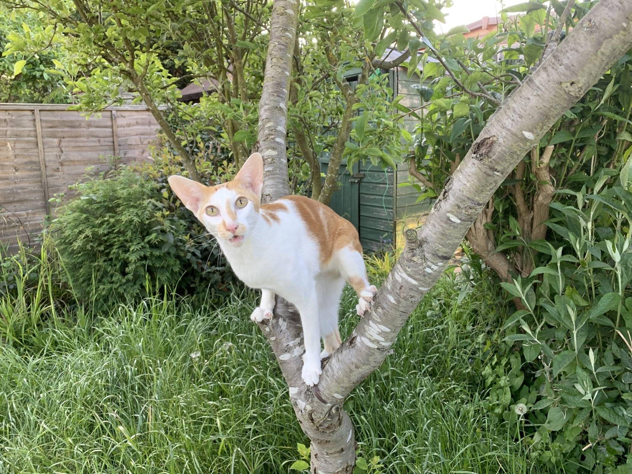 Renegade The Tree Kingdom Pet News Animal Stories Kittens Cutest