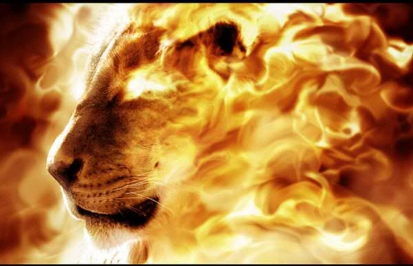 For Our God Is A Consuming Fire Fire Lion Lion Of Judah Tribe Of Judah