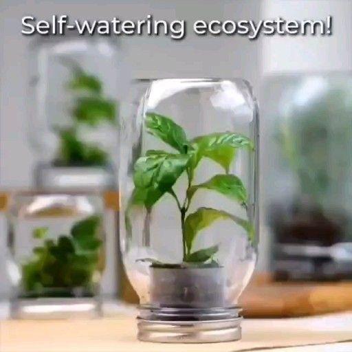 Plant hacks